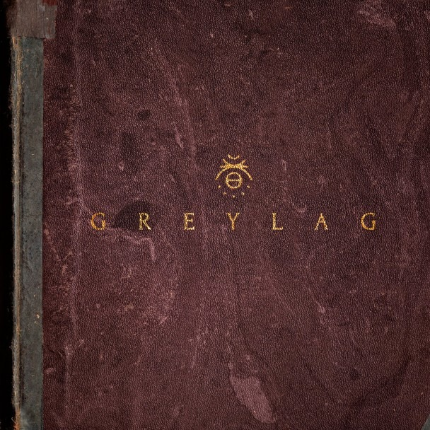 greylag-greylag