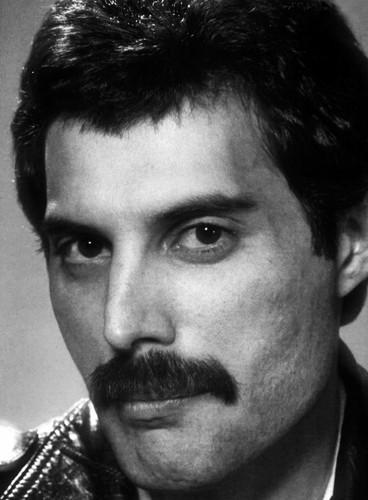 Freddie-Mercury-HQ-freddie-mercury-31872932-368-500